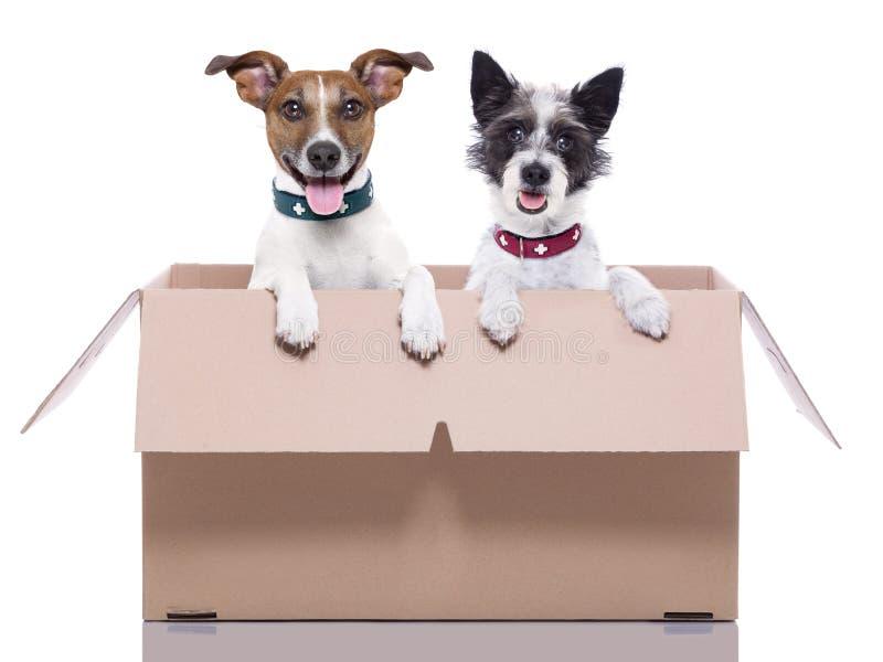 Zwei Posthunde stockfotografie