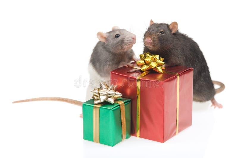 Zwei Ratten mit eingewickelten Geschenken stockfotografie