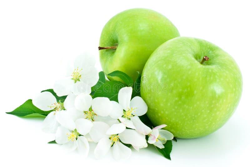 Zwei reif, grüne Apfel- und weißeblumen. stockbild