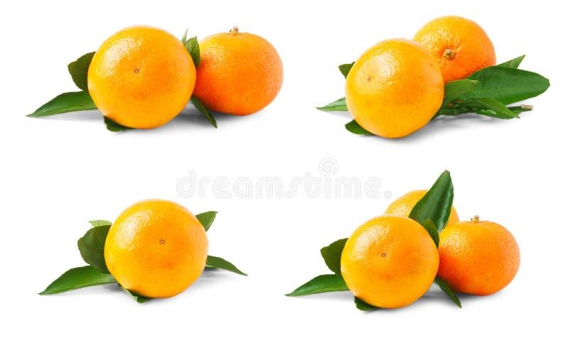 Zwei reife Tangerinen mit den Blättern lokalisiert auf weißem Hintergrund Satz oder Sammlung stockfotos