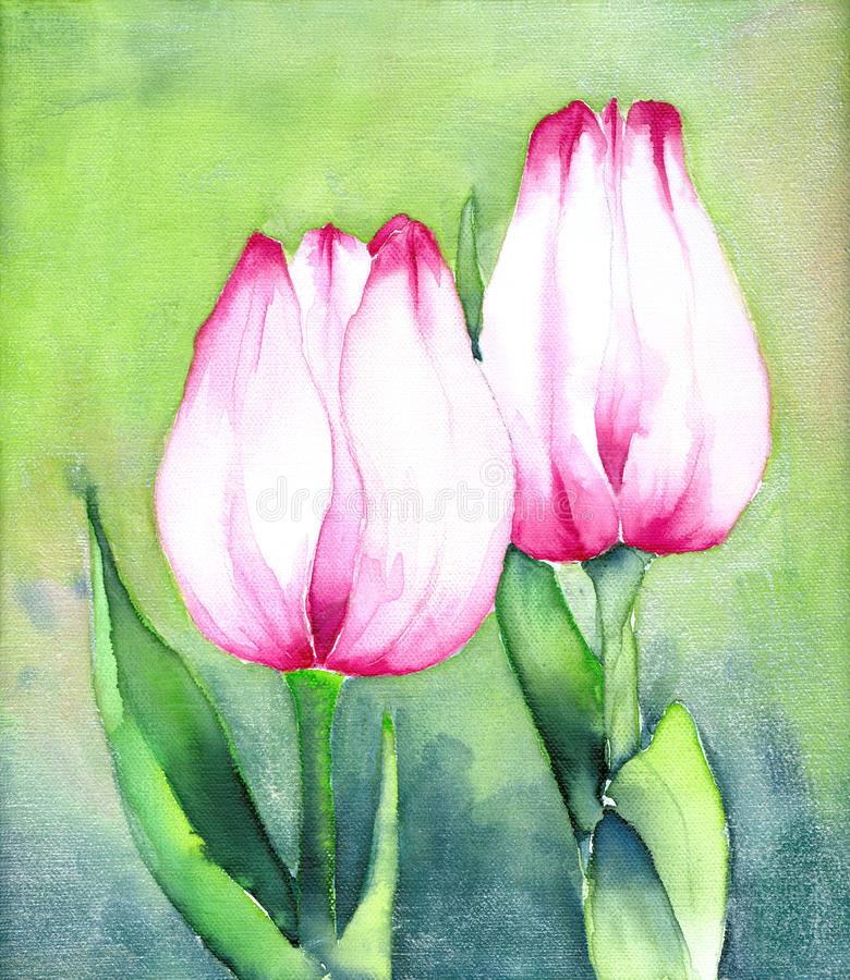 Zwei rosafarbene Tulpen stock abbildung