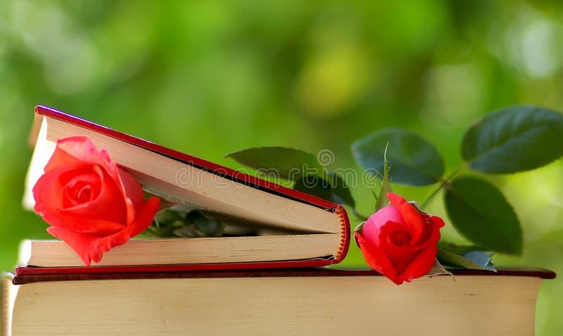 Zwei Rosen. stockfotografie