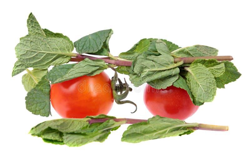 Zwei rote Tomaten und tadellose Niederlassungen mit den frischen grünen Blättern lokalisiert auf weißem Hintergrund lizenzfreie stockfotografie