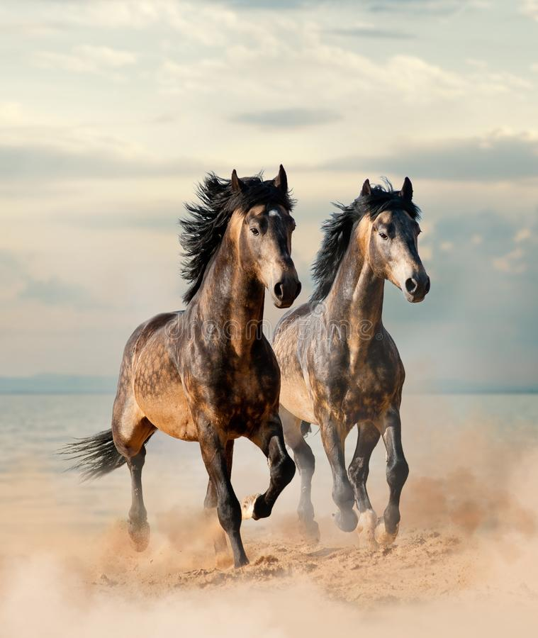 Zwei schöne Pferde stockbilder