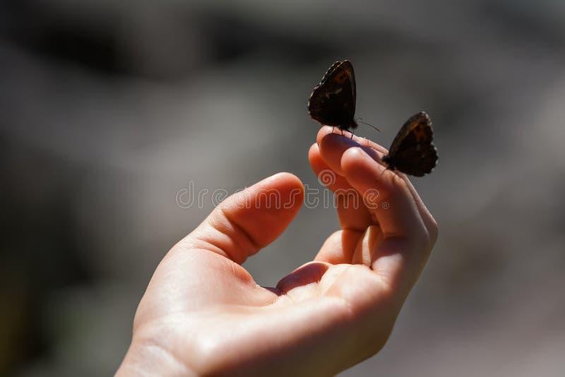 Zwei Schmetterlinge an Frau ` s Hand stockfoto