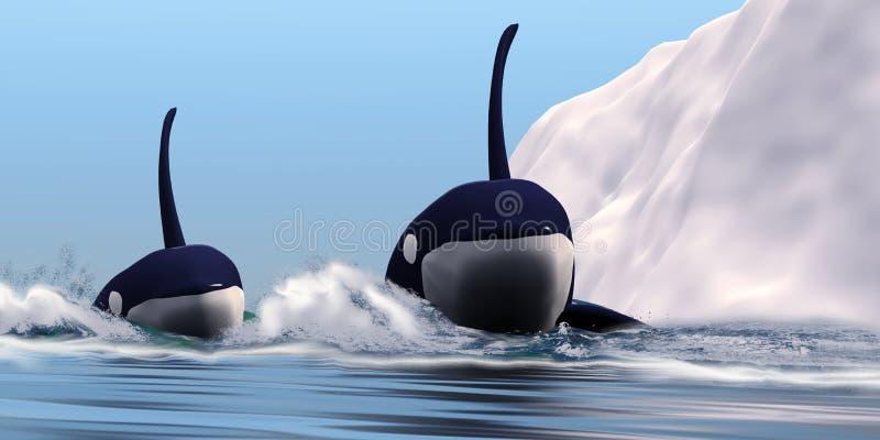 Zwei Schwertwalwale lizenzfreie abbildung