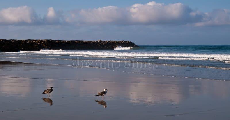 Zwei Seemöwen und ihre Reflexion auf dem nassen Sand lizenzfreies stockfoto
