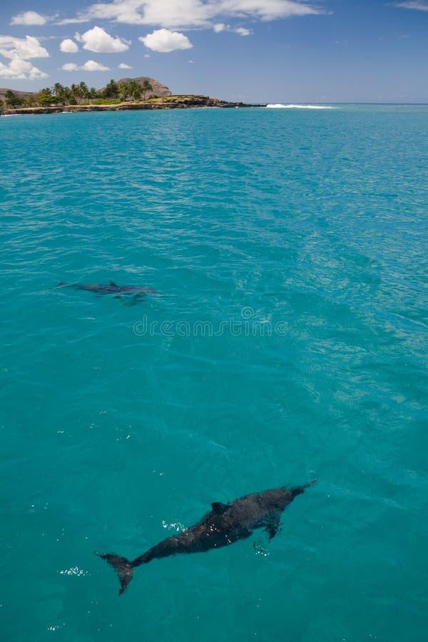 Zwei Spinner-Delphine lizenzfreie stockbilder