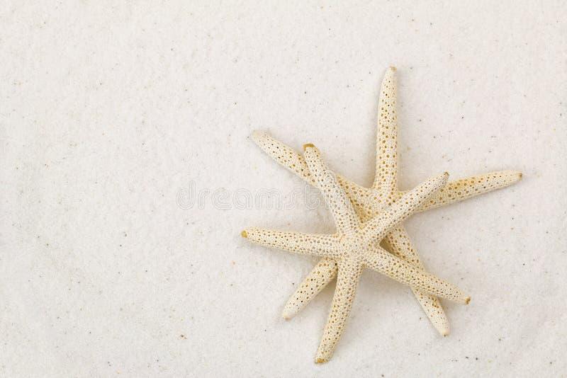 Zwei-Sternefische, bekannt als Seesterne, auf weißer feiner Sandstrandrückseite stockfotografie