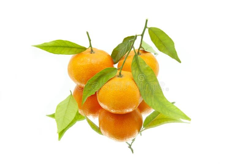 Zwei Tangerinen mit Blättern auf weißem Hintergrund auf Spiegel stockbilder