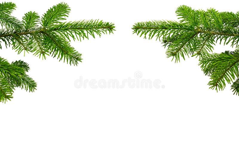 Zwei Tannenzweige 1 стоковое фото