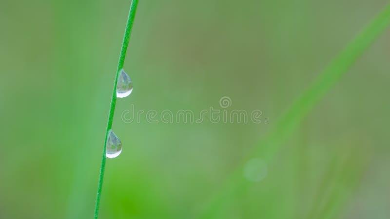 Zwei Tau-Tropfen, die auf Gras-Blatt glühen lizenzfreies stockbild