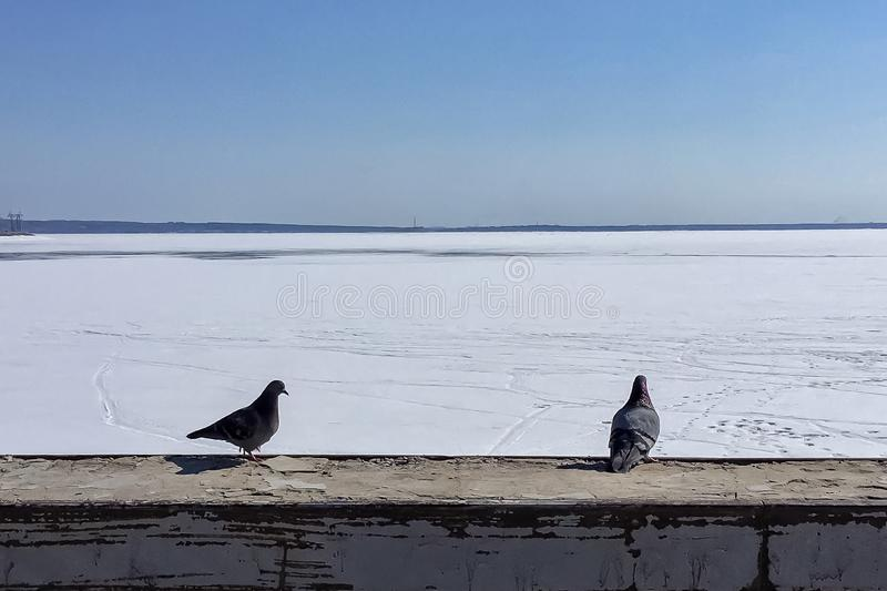 Zwei Tauben, die nahe bei dem Hintergrund des Wintermeerblicks sitzen lizenzfreie stockbilder