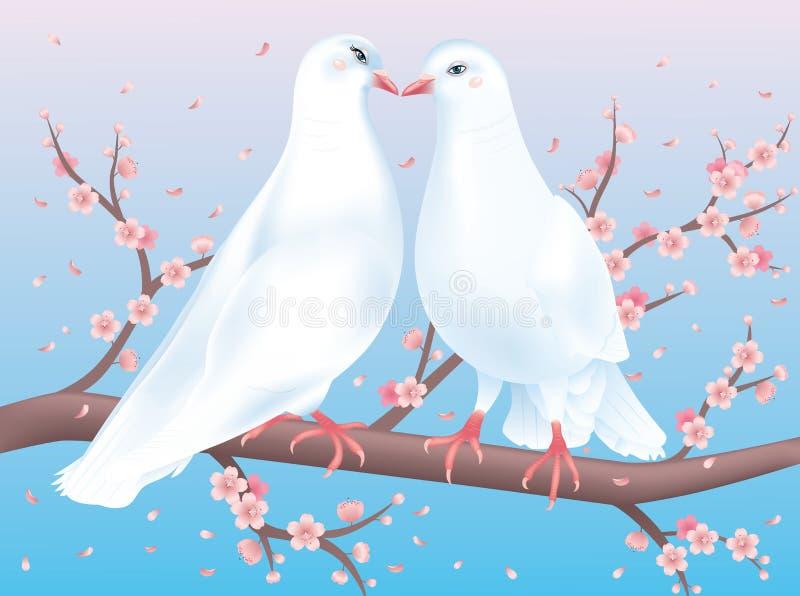 Zwei Tauben mit geöffneten Augen. stock abbildung