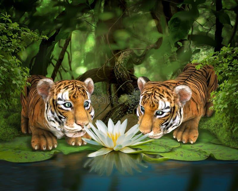 Zwei Tiger, die Lotos schnüffeln lizenzfreie abbildung