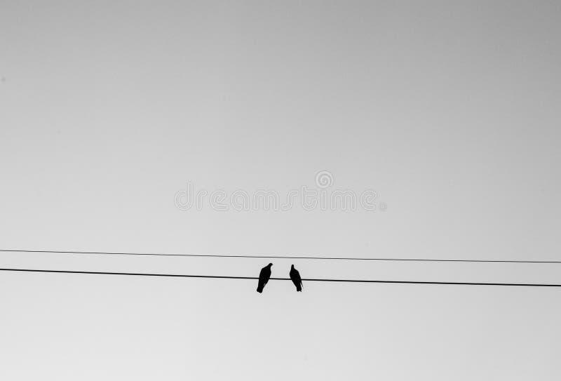 Zwei Vögel, die auf Draht mit Himmelhintergrund im Schwarzweiss-Ton hocken lizenzfreies stockfoto