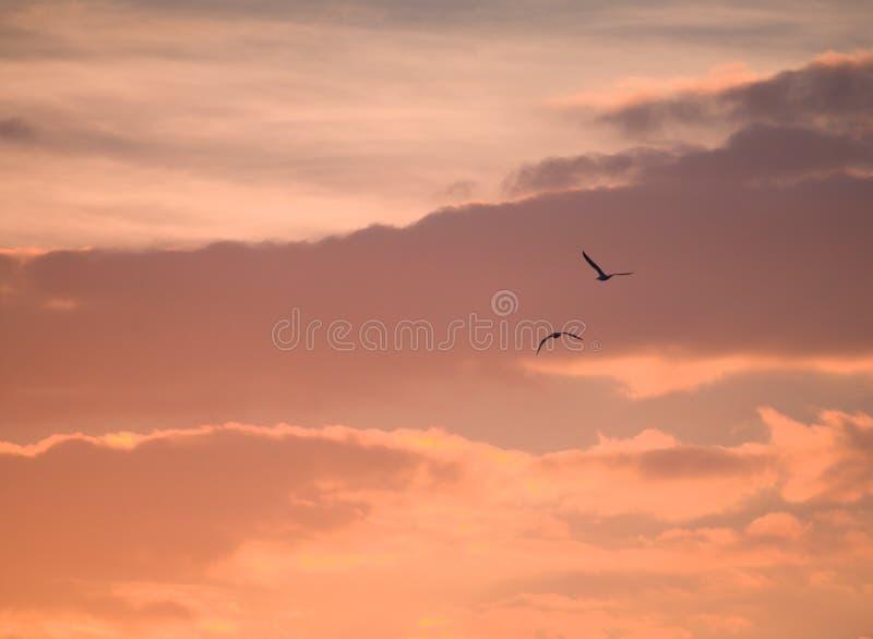 Zwei Vögel, die weg zur Sonnenuntergangzeit fliegen lizenzfreie stockfotos
