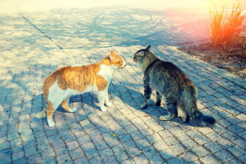 Zwei ver?rgerte Katzen betrachtet einander stockfoto