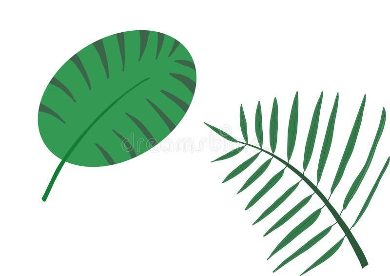 Zwei verschiedene Formen von Blättern vektor abbildung