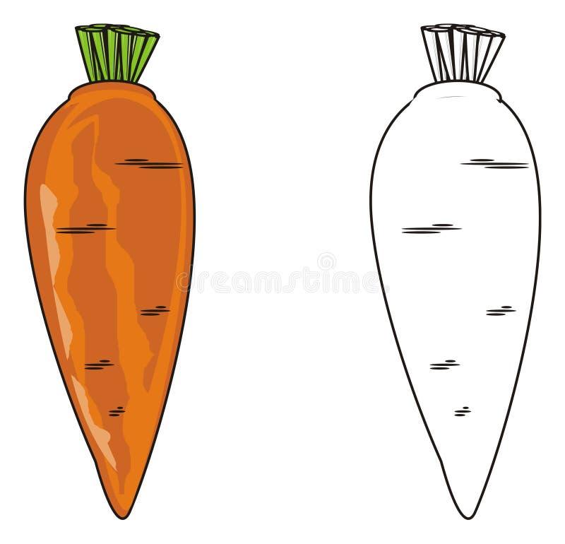 Download Zwei verschiedene Karotten stock abbildung. Illustration von gemüse - 90226489