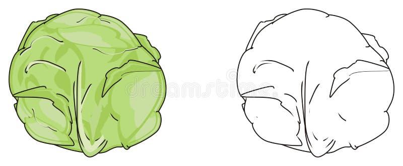 Download Zwei Verschiedene Kohlpflanzen Stock Abbildung - Illustration von leben, farbton: 90225262