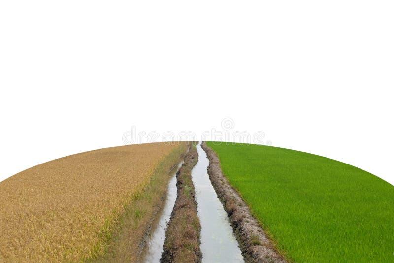 Zwei Wasserströme durch die Mitte zwischen einem trockenen und trockenen Reis f stockfotos
