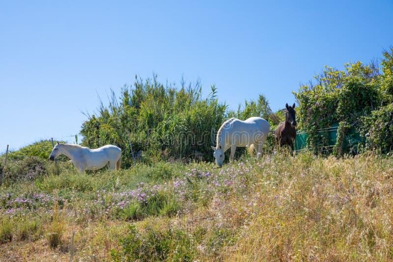Zwei weiß und braune Pferde eins in der Landschaft stockbilder