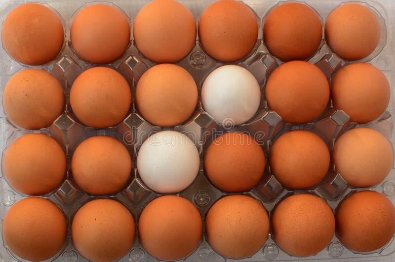 Zwei weiße Eier zwischen anderen braunen Eiern stockfotografie