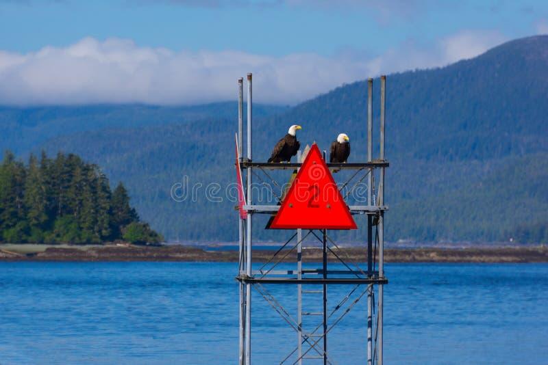 Zwei Weißkopfseeadler auf Navigations-Zeichen stockbild