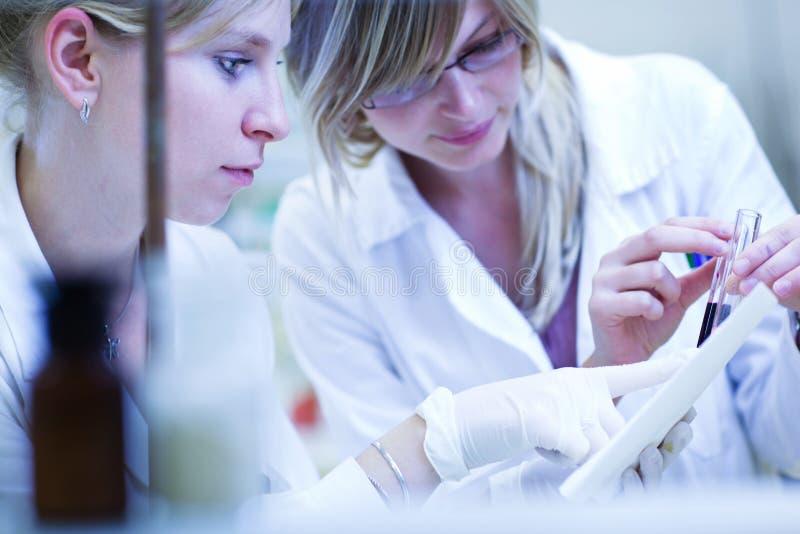 Zwei weibliche Forscher, die Forschung durchführen lizenzfreie stockfotografie