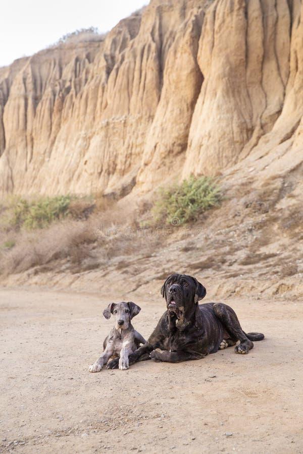 Zwei Welpen auf Strandwanderweg stockfotografie