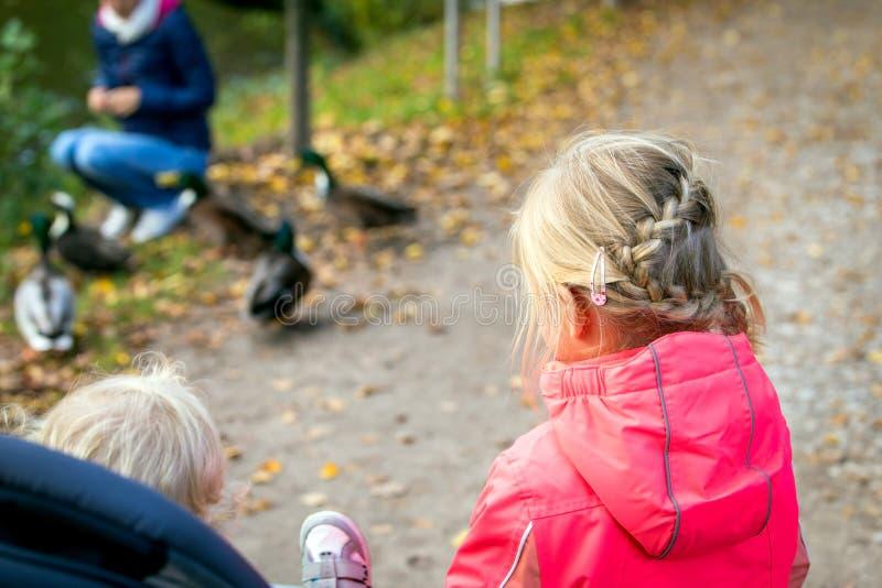 Zwei wenig childs, die zu den Enten auf dem Weg schauen lizenzfreies stockbild