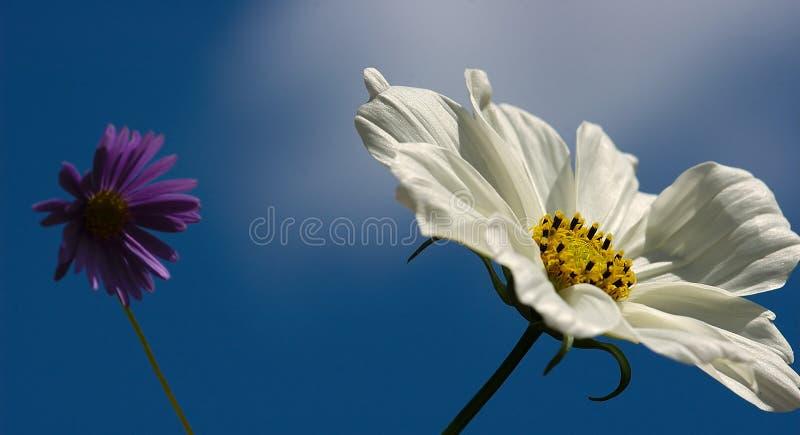 Zwei wilde Blumen stockfotos