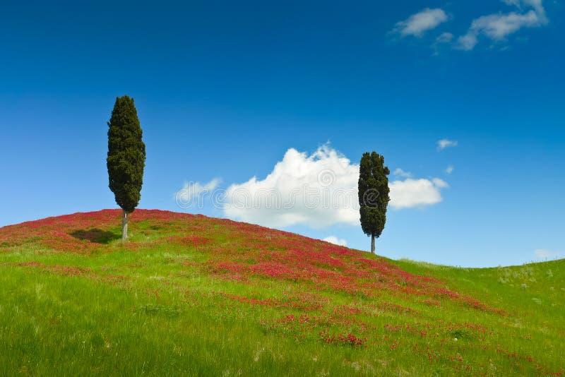 Zwei Zypressen lizenzfreies stockbild