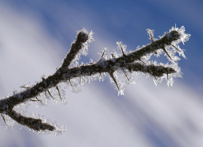 Zweig bedeckt mit Reif lizenzfreie stockfotos