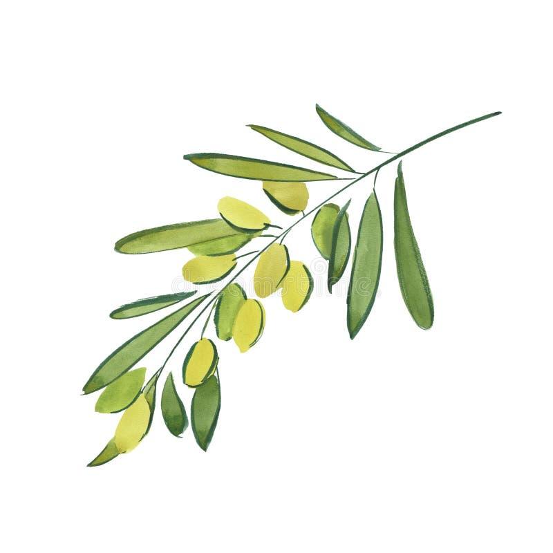 Zweig der Olive lizenzfreie abbildung