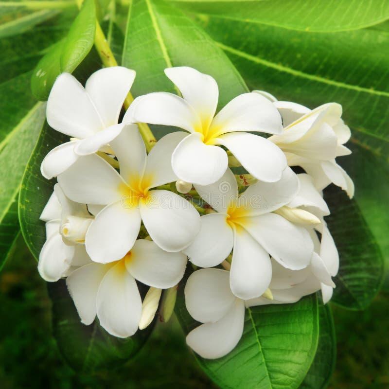 Zweig der tropischen Blumen lizenzfreie stockfotografie