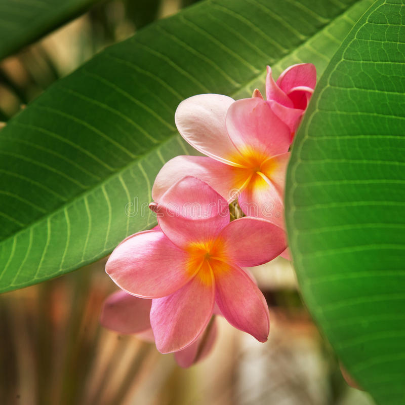 Zweig der tropischen Blumen stockfotografie