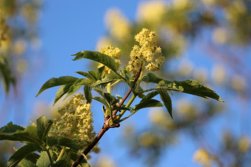 Zweig eines Apfelbaums lizenzfreie stockfotos