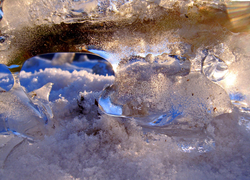 Zweig im Eis lizenzfreie stockfotos