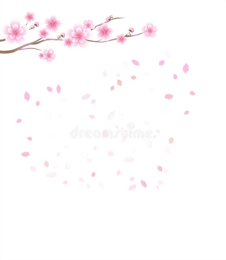 Zweig von Sakura Kirschblüten- und -fliegenblumenblätter lokalisiert auf W stock abbildung