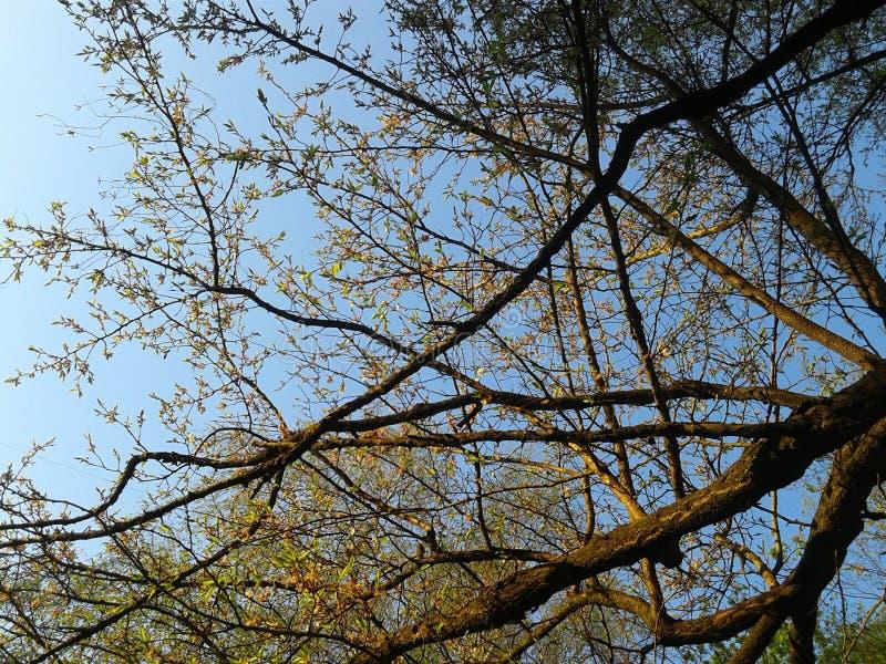 Zweige der Bäume lizenzfreies stockfoto