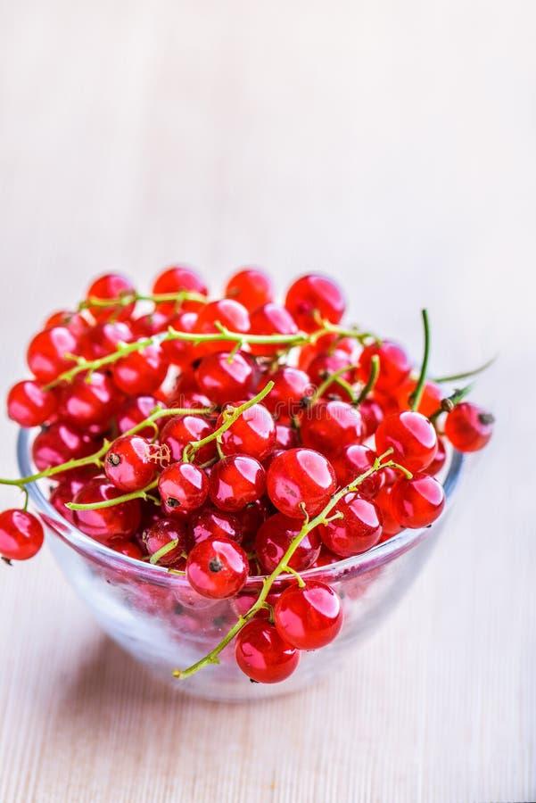 Zweige der roten Johannisbeere stockfotos