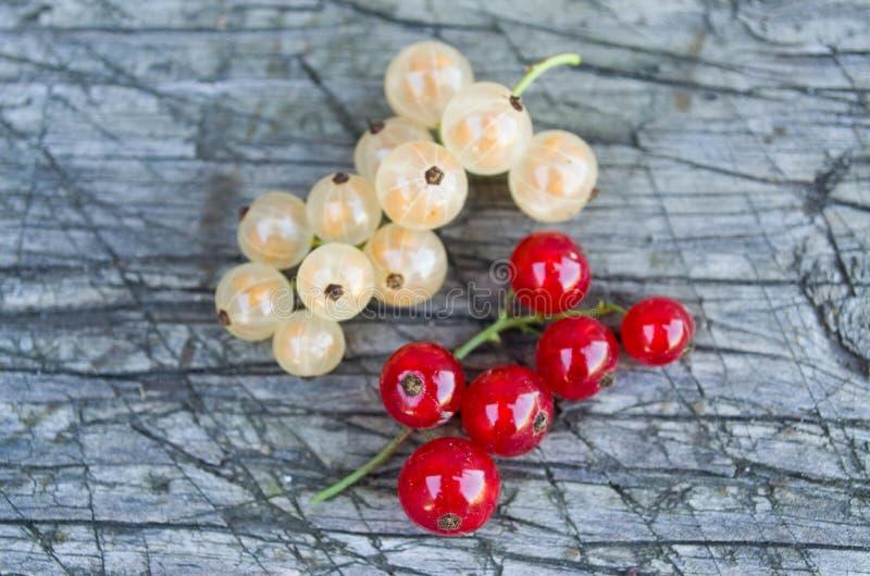 Zweige der weißen und roten Johannisbeere lizenzfreie stockfotografie