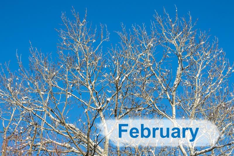 Zweige des Baums bedeckt vom Reif und vom Schnee auf Hintergrund des Winterwaldes im Schnee lizenzfreie stockbilder