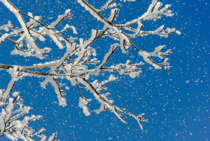 Zweige des Baums mit weißem Schnee lizenzfreie stockbilder