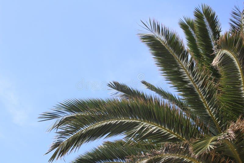 Zweige einer Palme stockfoto