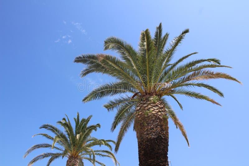Zweige einer Palme stockbilder