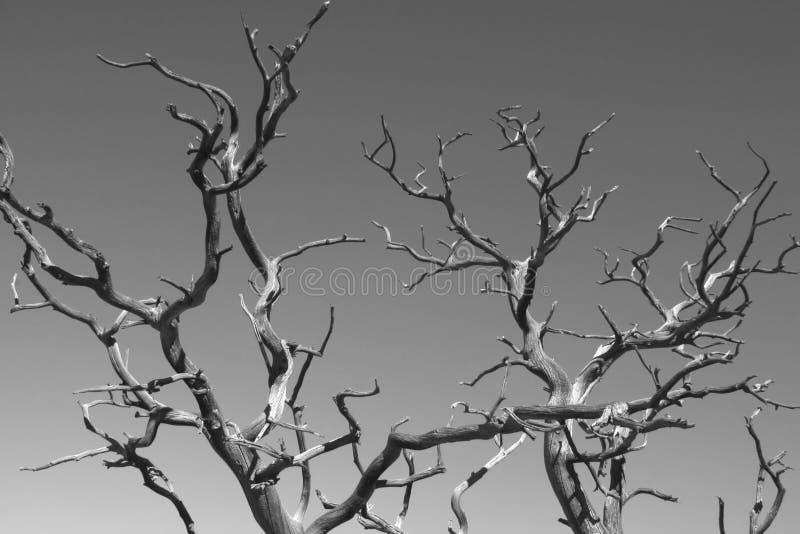 Zweige erreichen gen Himmel lizenzfreies stockbild