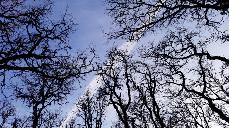 Zweige im Himmel lizenzfreie stockfotografie